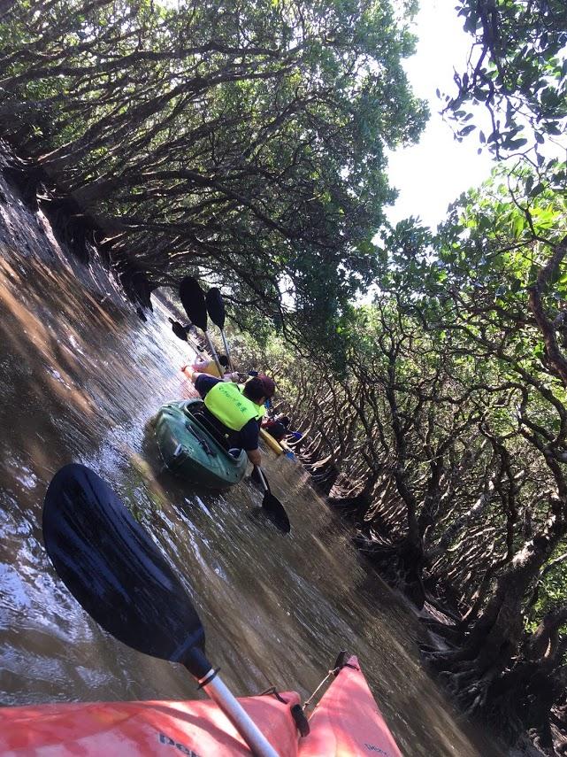 カヌーは段々密林へ