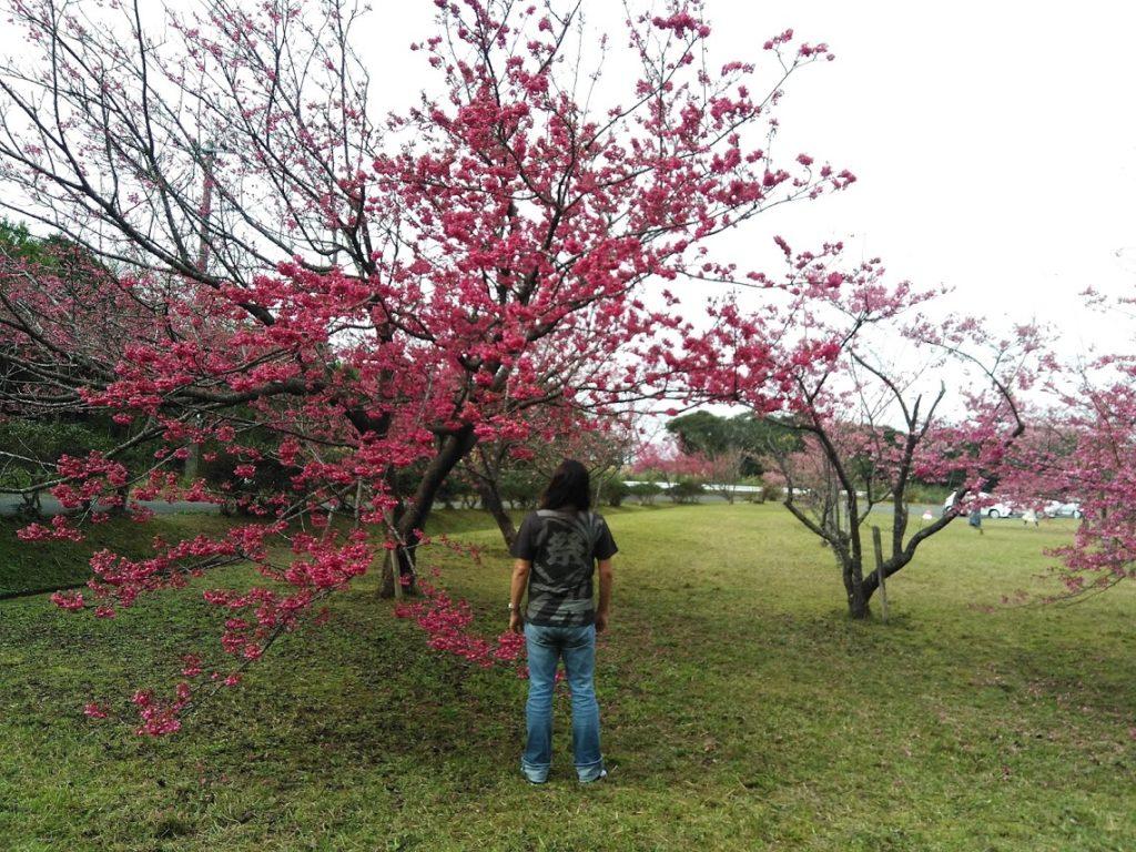満開桜!!