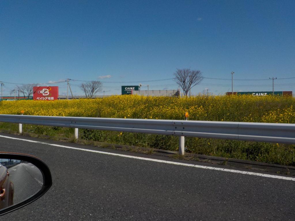 熊谷パイパス車窓から見える菜の花