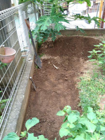 掘り起こされたニンニクエリア横から