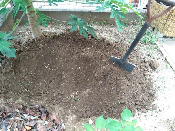 掘り起こされた土