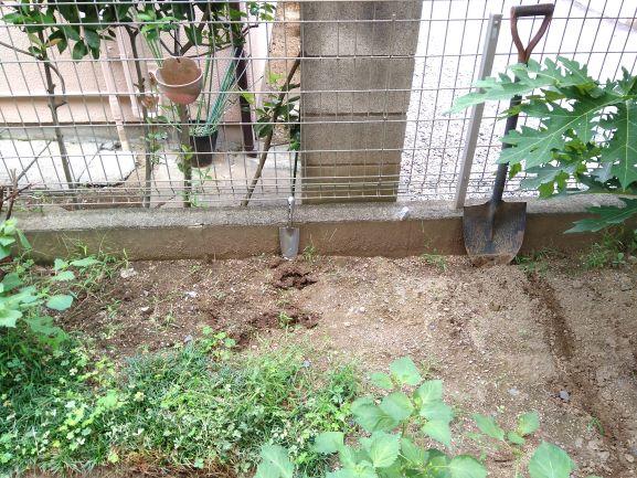 畑(ニンニクエリア)掘り起こし前