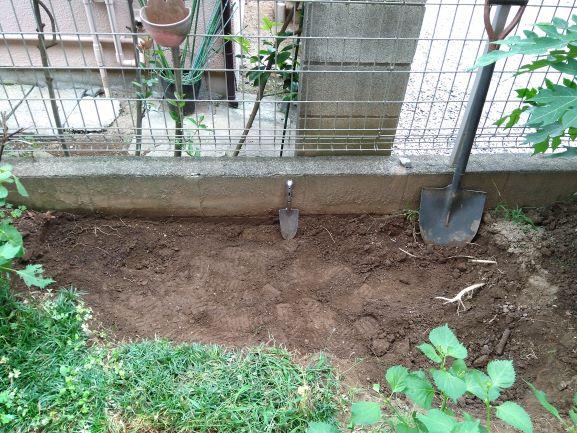 掘り起こされたニンニクエリア