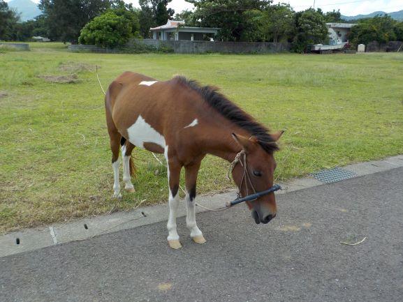 新垣食堂の駐車場にいた馬